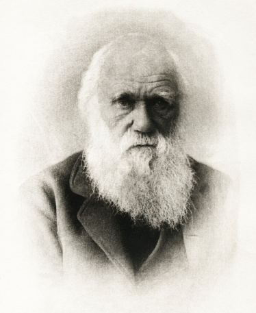 evolution, creation, creationism, intelligent design, natural selection