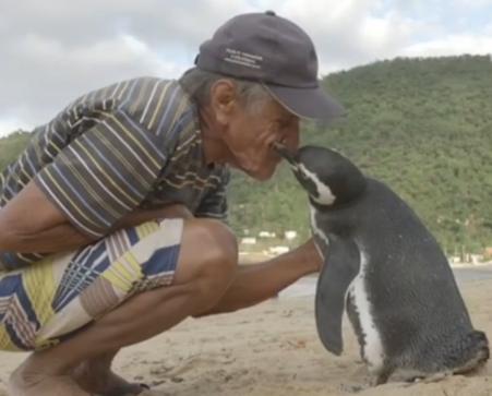 Man greets friendly penguin