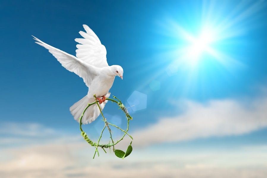 Dove carrying peace symbol