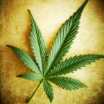 Marijuana or Hemp Leaf